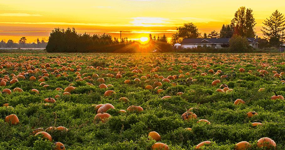 5 Horrifyingly Good Halloween Email Creative Examples